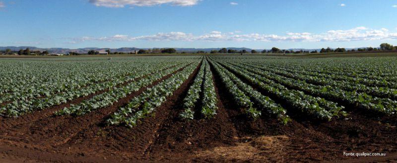 lavorare nelle farm in Australia